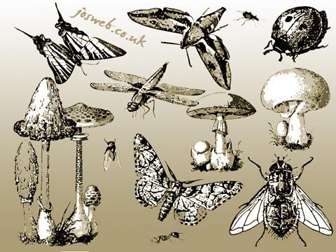 mushroom_insect_vector