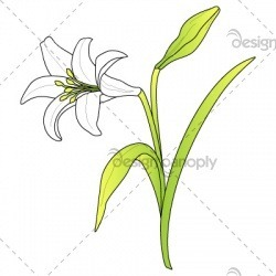 easter-lily-001-01_0